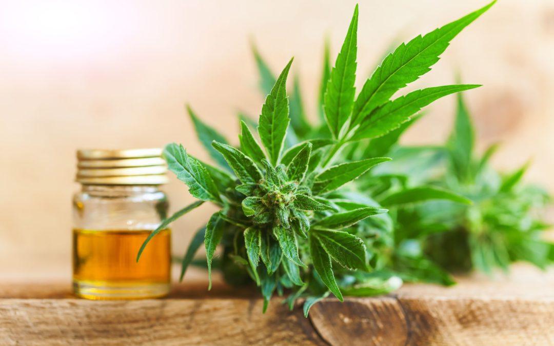 How do you compare CBD vs. THC?