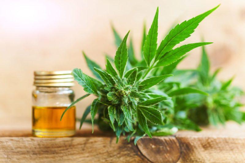 jar of cbd oil next to cannabis plant